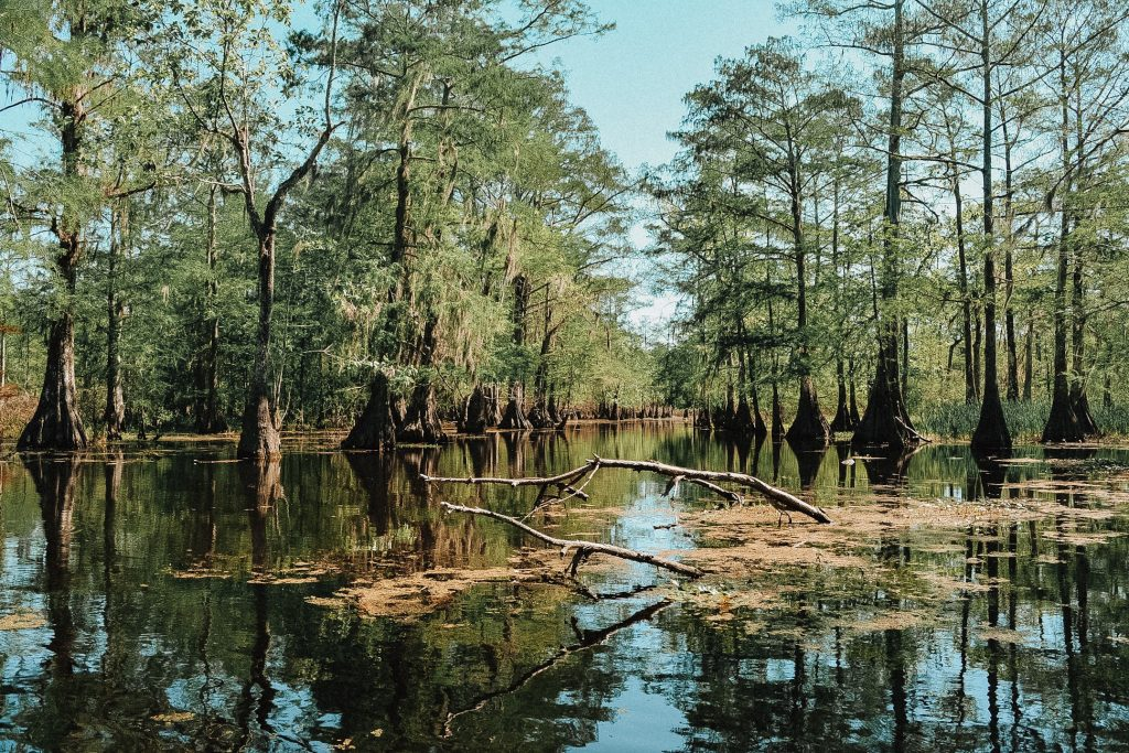 bayou in swamp